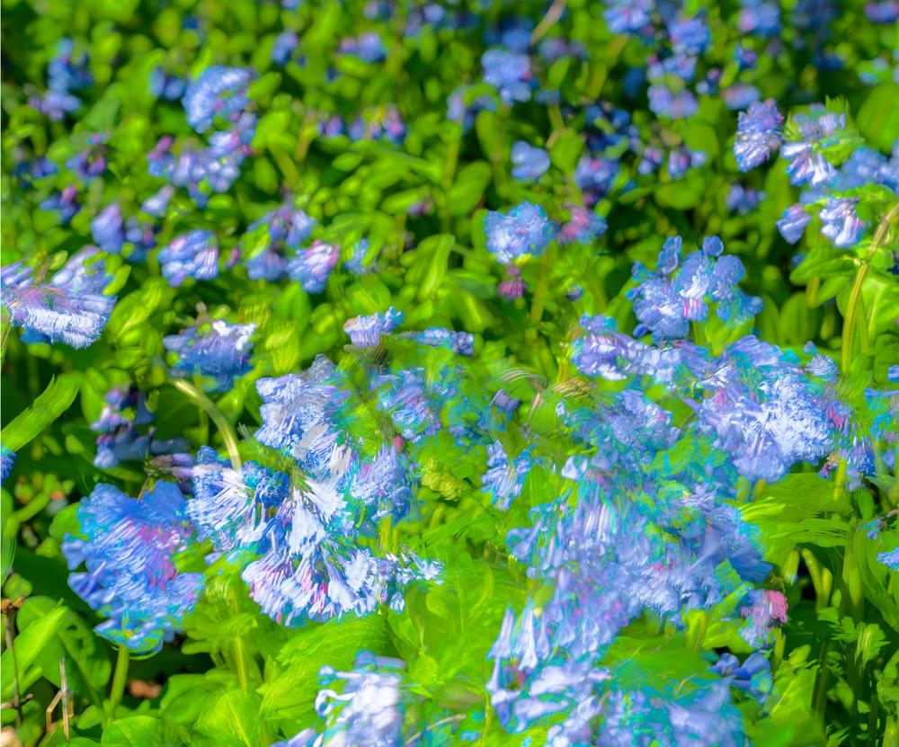 Bluebells Photography Art | Cerca Trova Photography