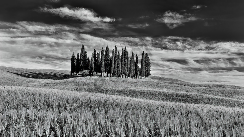 Cypress Grove Photograph