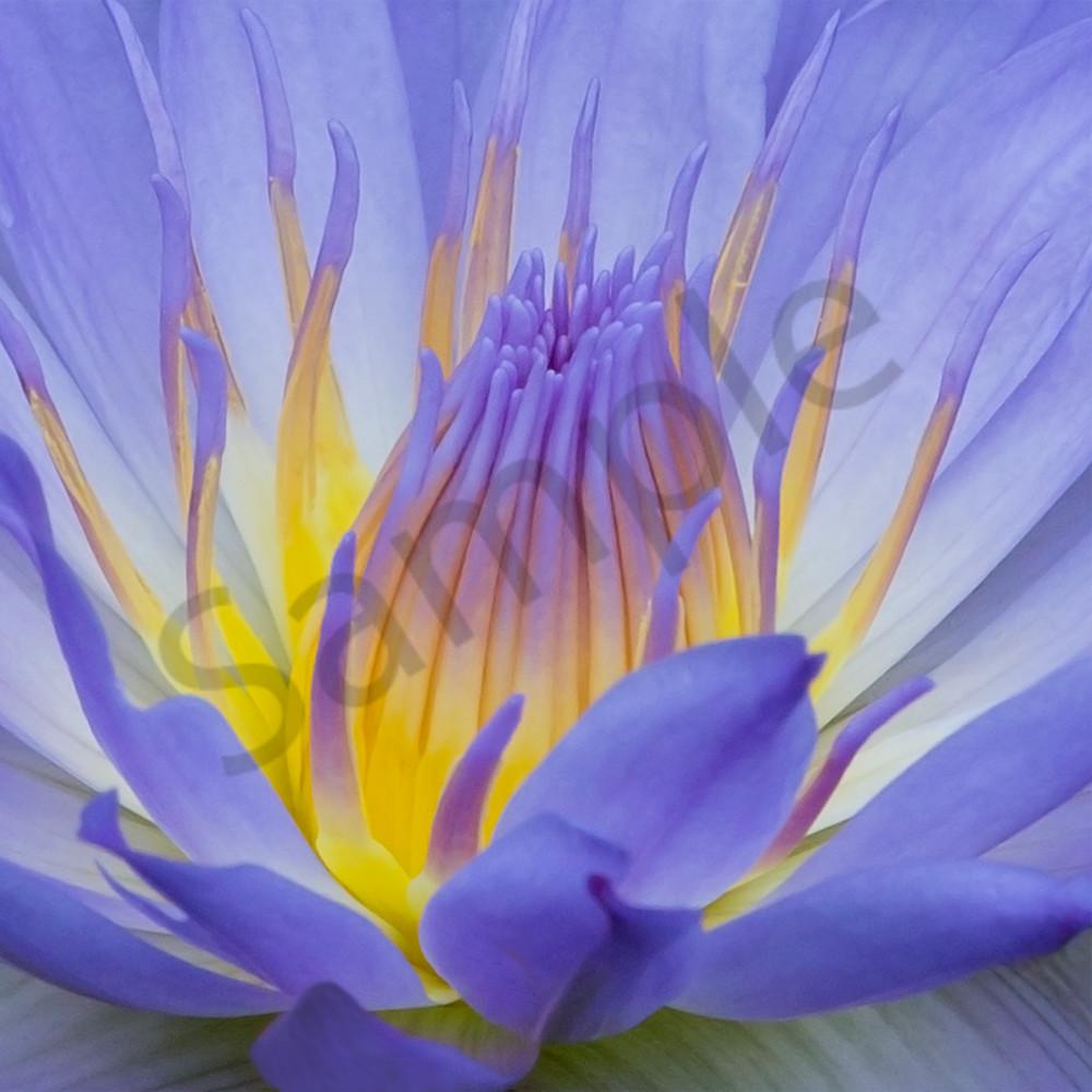 Inner Radiance Photograph