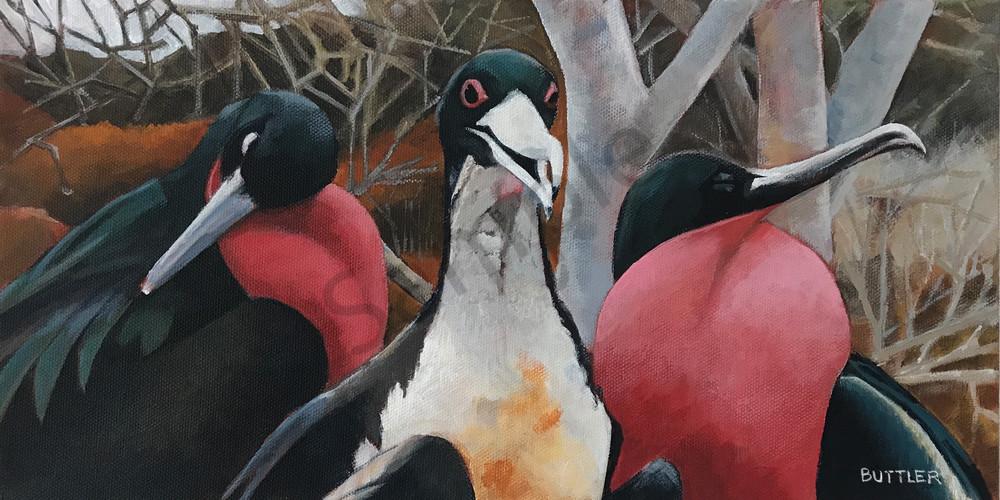 Frigate Birds 1 Art | Elizabeth Buttler