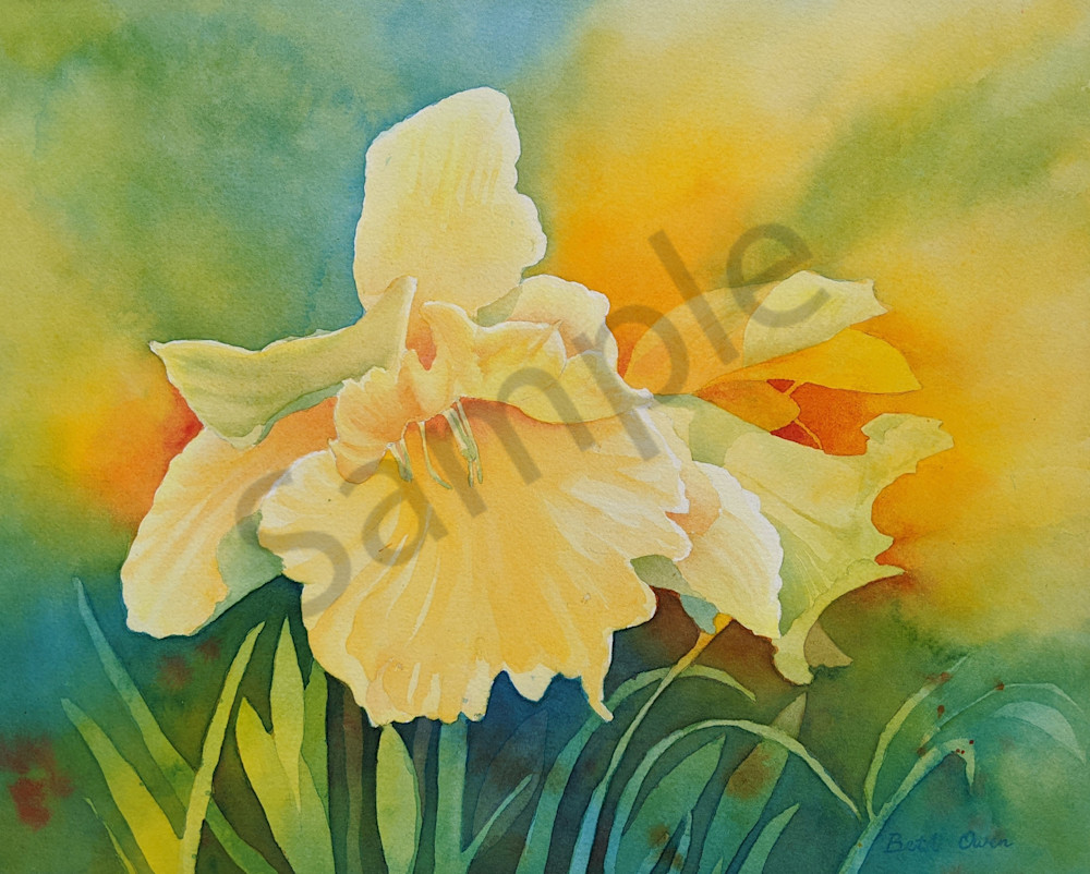 """""""Daffodil"""" watercolor print available in paper, metal, acrylic, canvas or wood by Beth Owen"""