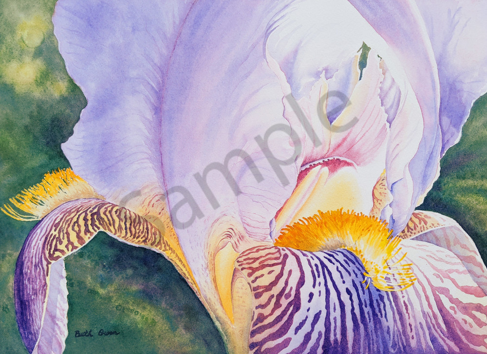 """""""Morning Glow"""" watercolor prints available in paper, metal, acrylic, canvas and wood by Beth Owen"""