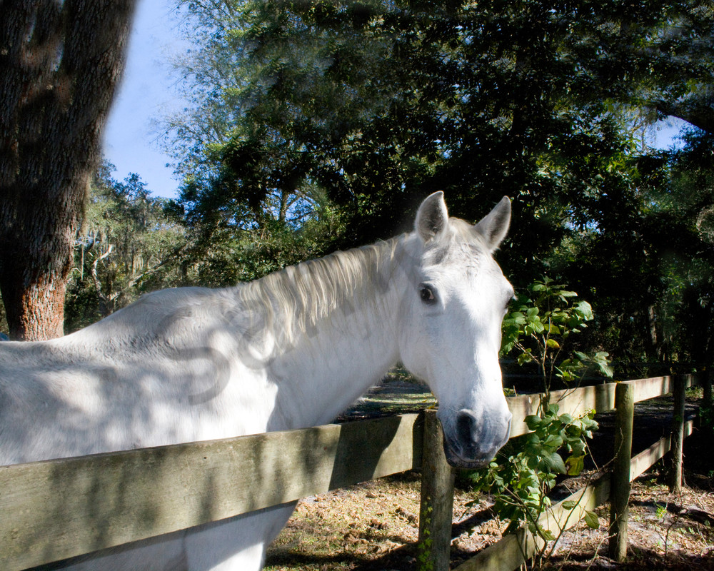 Curious Mare Photography Art | It's Your World - Enjoy!