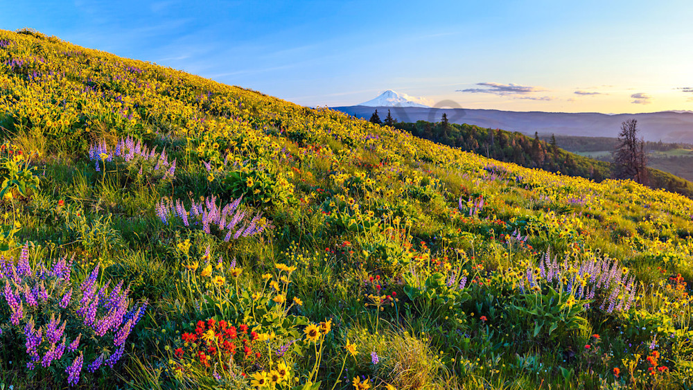 Mt Hood In Spring Photography Art   Scott Cordner Photography