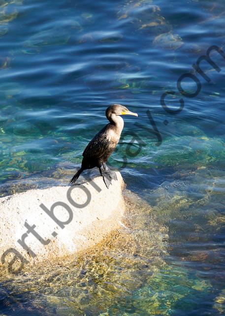 Dsc9859 Photography Art | bohcay LLC