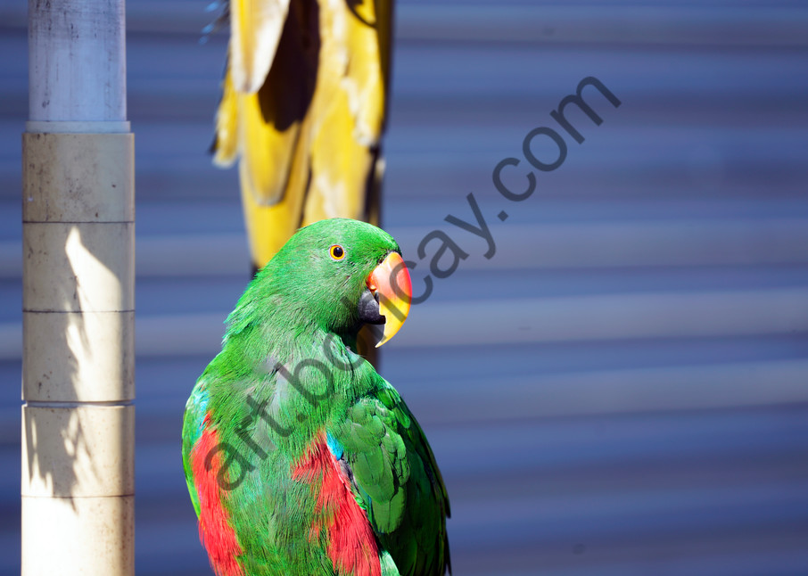 Dsc9695 Photography Art   bohcay LLC
