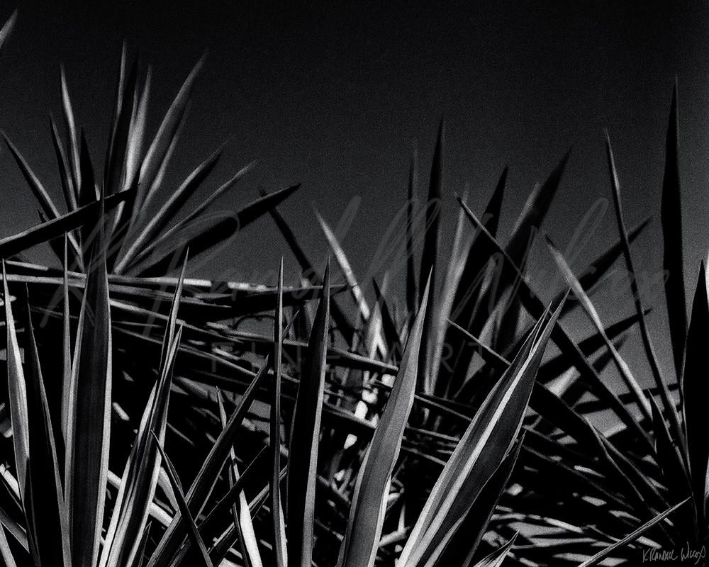 Yuccas #3 Art   K. Randall Wilcox Fine Art