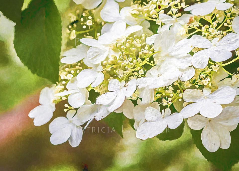 Tis Spring