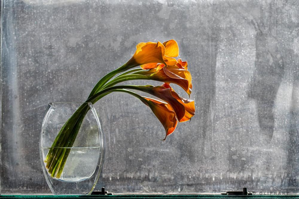 calla lilies orange flowers