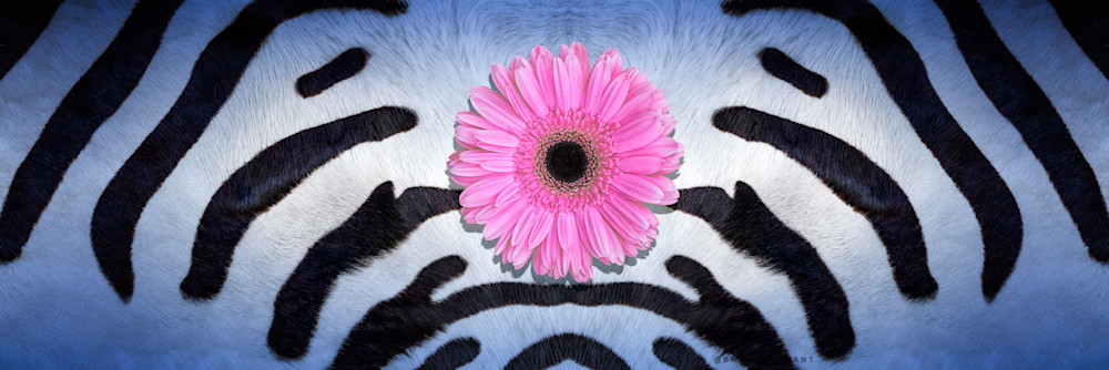 abstract art, art photograph of flowers, wildlife and animals, skins and pelts of animals, zebra skins,