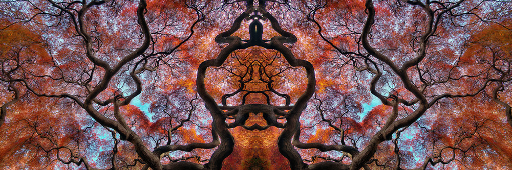 art photographs of Japanese Maple trees, abstract art photographs, photographs of fall orange leaves,