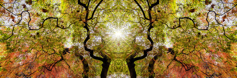 abstract art photographs, kaleidoscopes of Japanese Maple trees, orange and yellow fall leaves,
