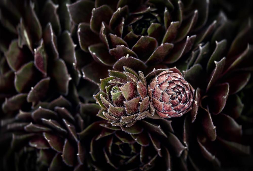 Pine Cones, cactus and succulents,