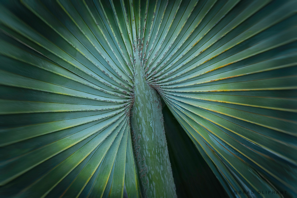 Palm leaves, circles and patterns, Palm trees and leafs,