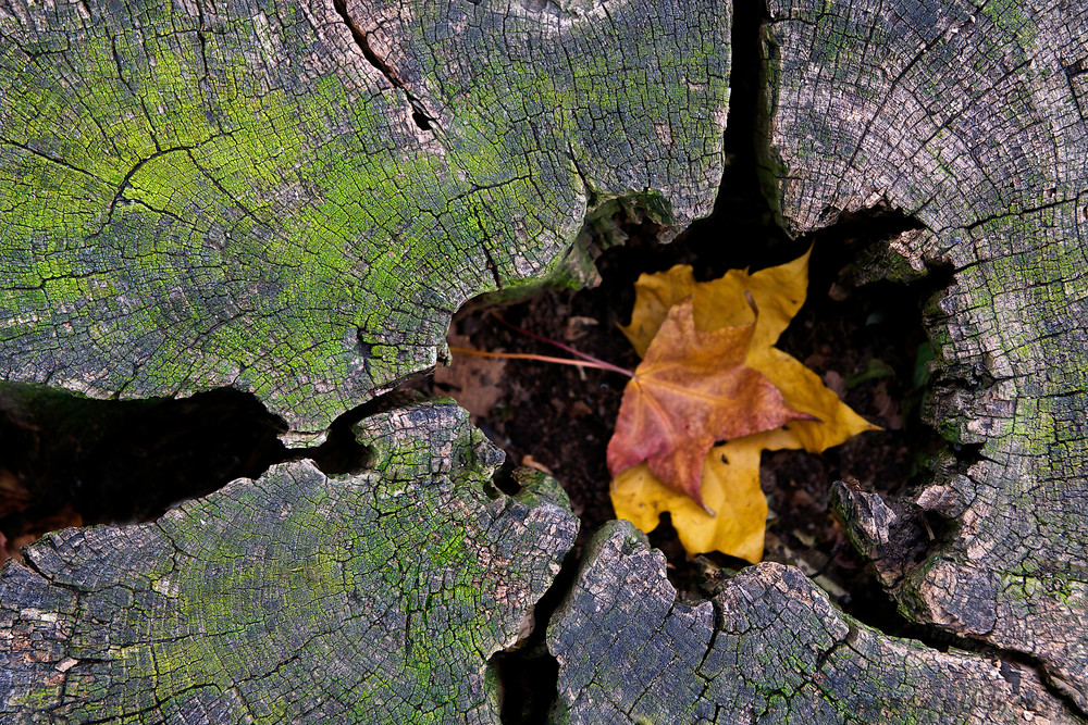 Y-Z  |  Leaf in Tree Trunk