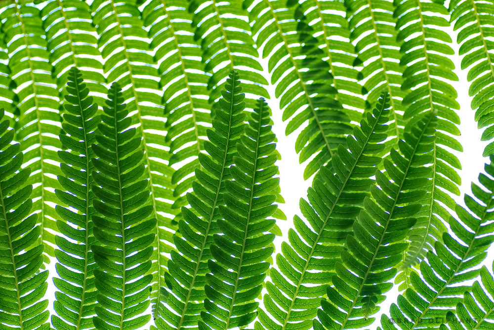 fern leaves, green plants, plants and ferns,