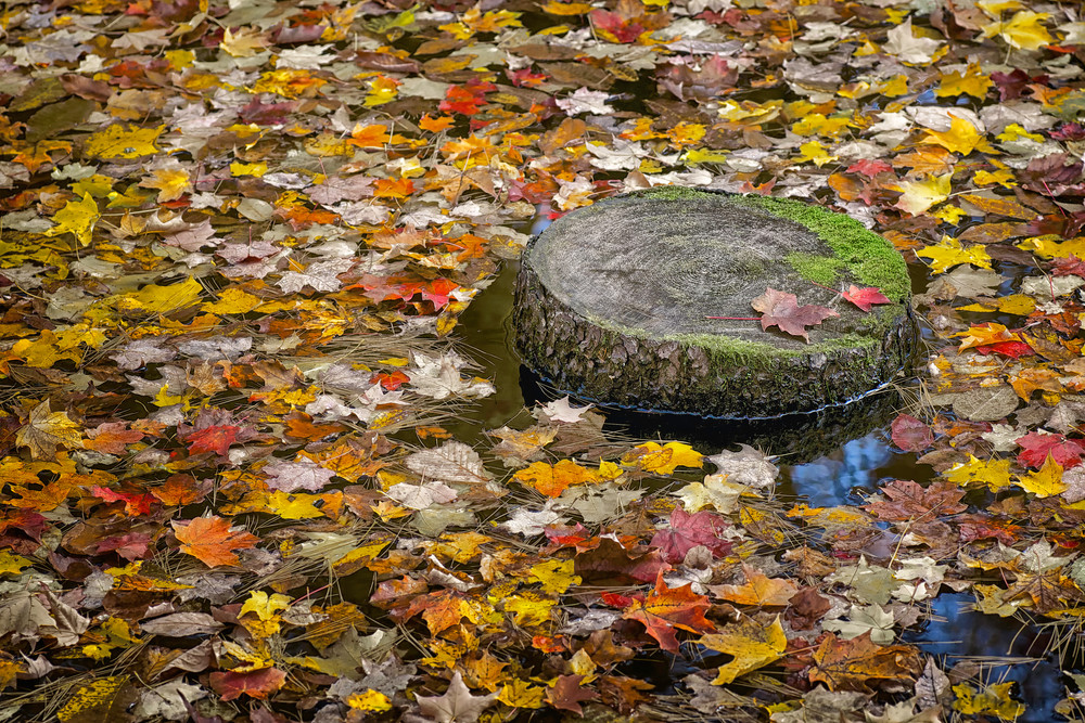 colorful fall leave, fall leaves, tree stumps, pond and lakes,