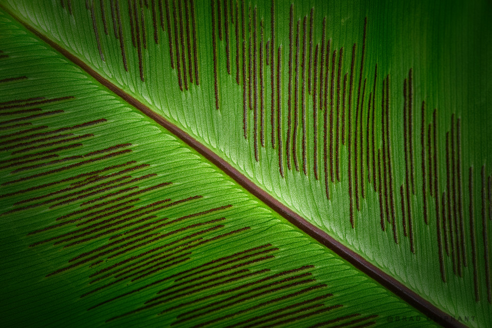 Fern leaves, Fern seeds, macro photography,