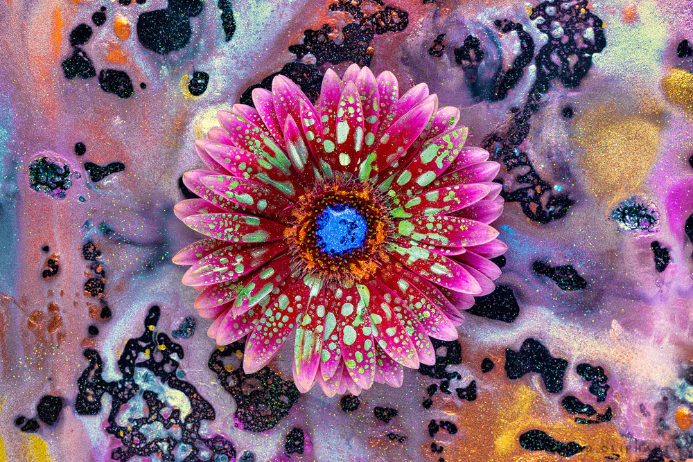 Macro flower photography, Mica pigment powders, Gerber Daisy art,