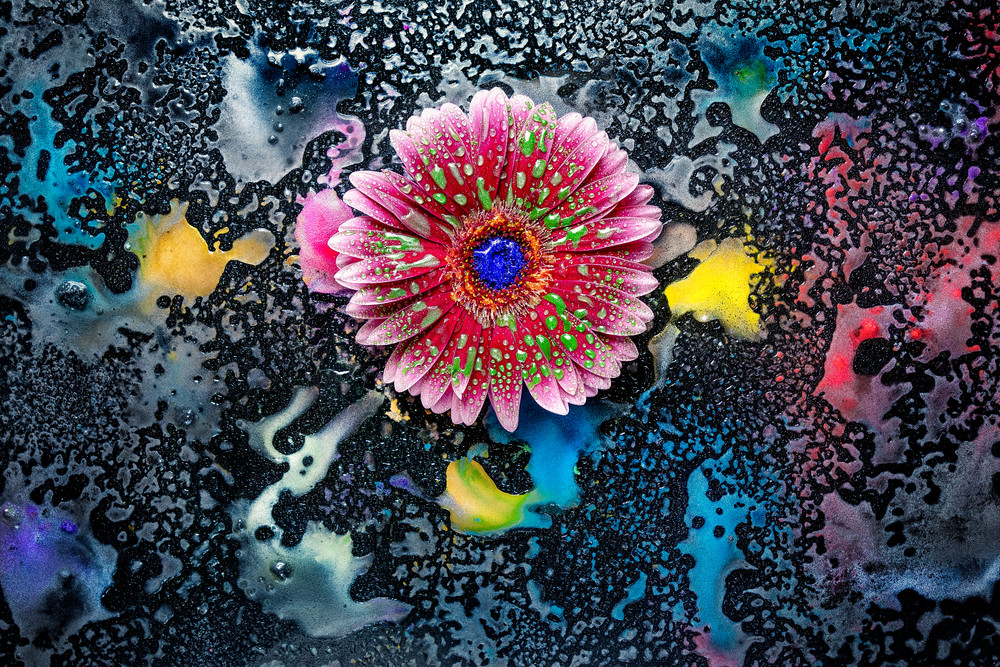 Gerber Daisy flowers, Mica Pigments and powders, abstract art photographs,
