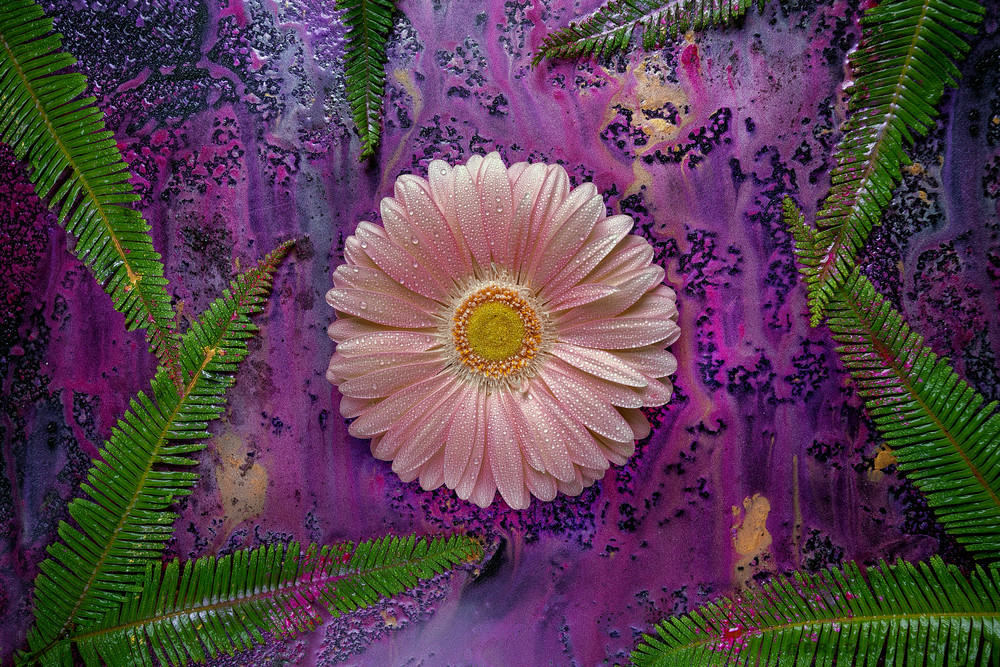 Mica Pigment powders, Gerber Daisy art, fern leaves and plants,