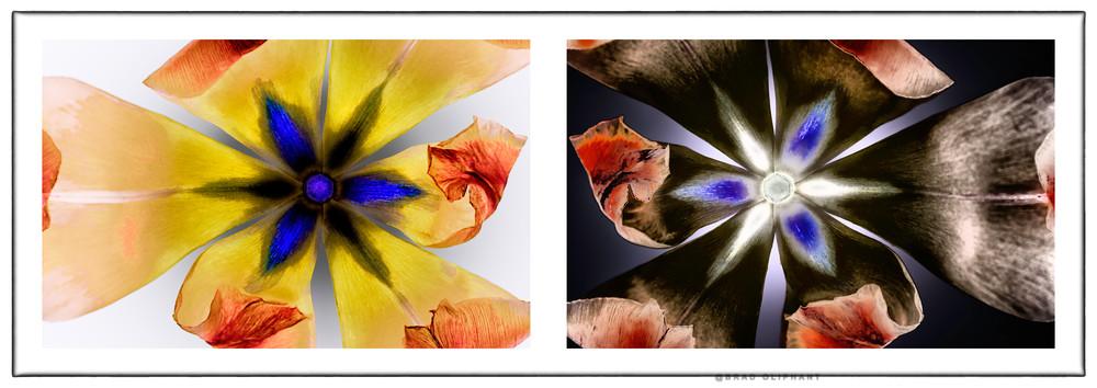 Namibian Yellow-Blue Pietersite  |  Tulips