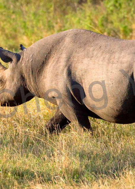 Other African Animals 002 Photography Art | Cheng Yan Studio