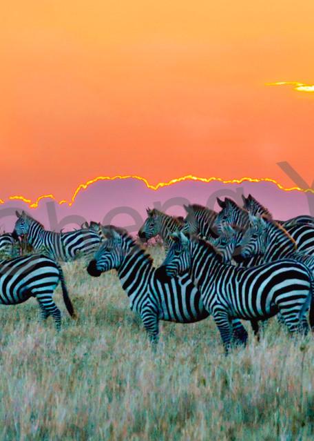 Zebras 005 Photography Art   Cheng Yan Studio
