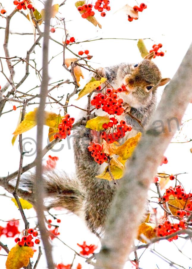 Squirrels And Chipmunks 006 Photography Art   Cheng Yan Studio