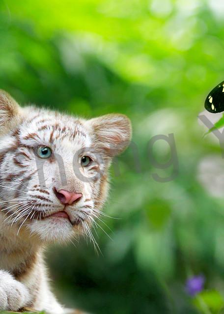 Tigers 012 Photography Art   Cheng Yan Studio