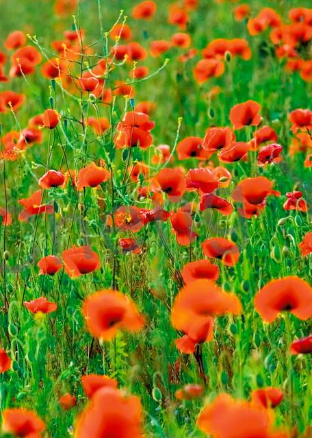 Flowers And Plants 014 Photography Art | Cheng Yan Studio