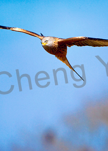 09co8977 Photography Art   Cheng Yan Studio