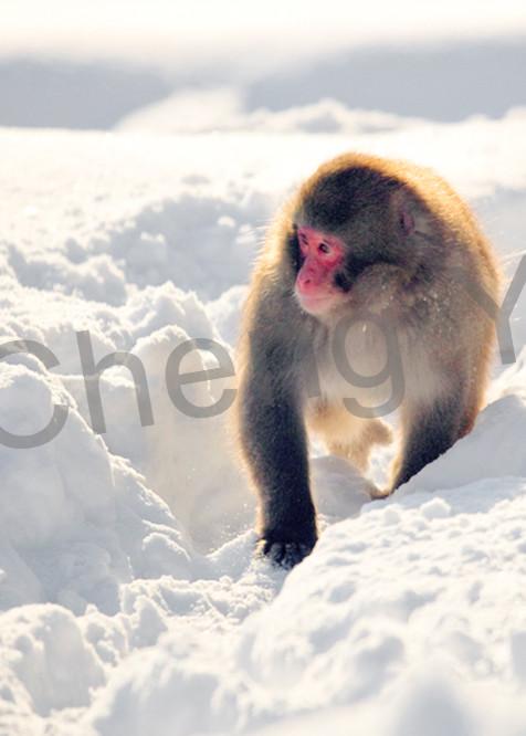 Japanese Macaques 012 Photography Art | Cheng Yan Studio