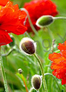 Flowers And Plants 004 Photography Art | Cheng Yan Studio