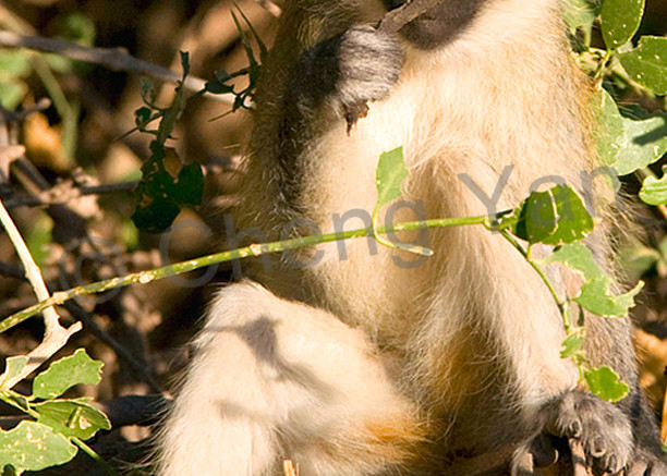 Other African Animals 014 Photography Art | Cheng Yan Studio