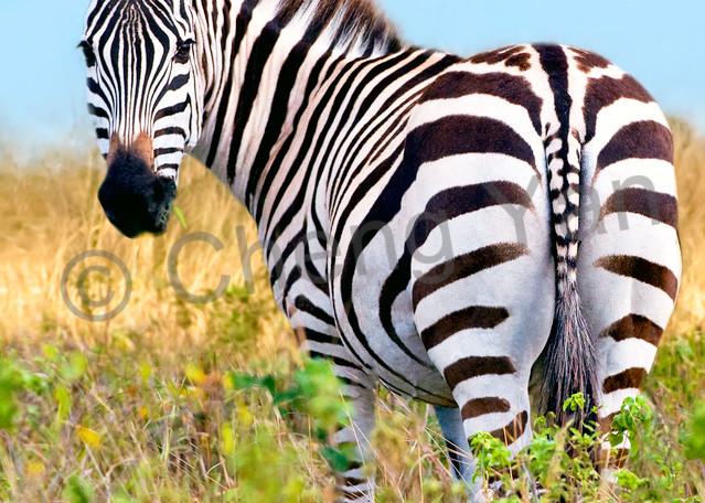 Zebras 001 Photography Art | Cheng Yan Studio