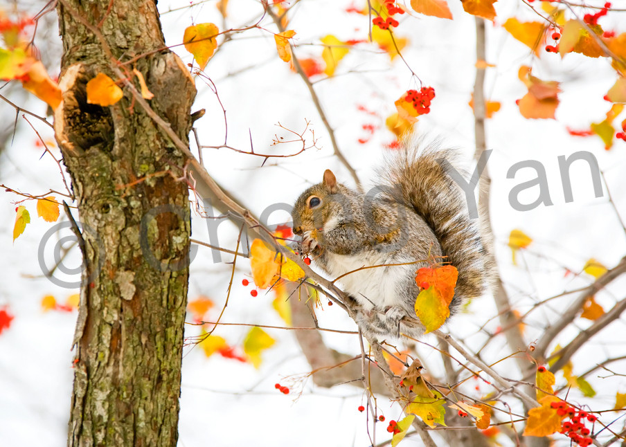 Squirrels And Chipmunks 003 Photography Art | Cheng Yan Studio