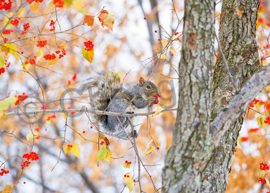 Squirrels And Chipmunks 002 Photography Art | Cheng Yan Studio