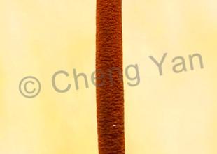 Kingfishers 056 Photography Art | Cheng Yan Studio