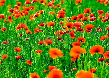 Flowers And Plants 003 Photography Art | Cheng Yan Studio