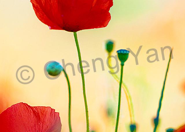 Flowers And Plants 012 Photography Art | Cheng Yan Studio