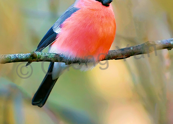 Garden Birds 06 Photography Art | Cheng Yan Studio
