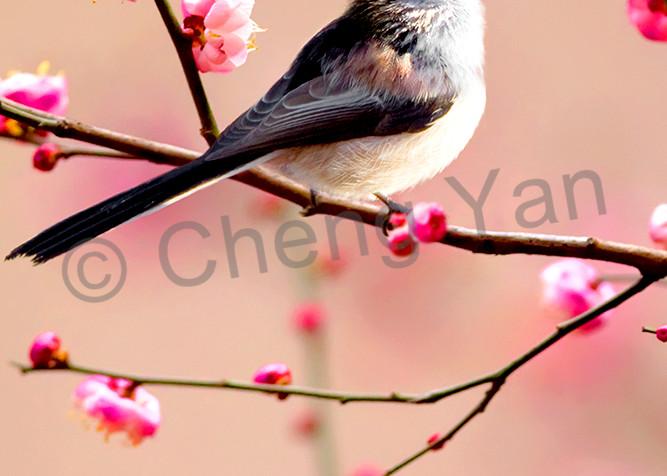Garden Birds 02 Photography Art   Cheng Yan Studio