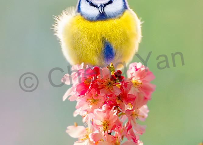 Garden Birds 01 Photography Art | Cheng Yan Studio