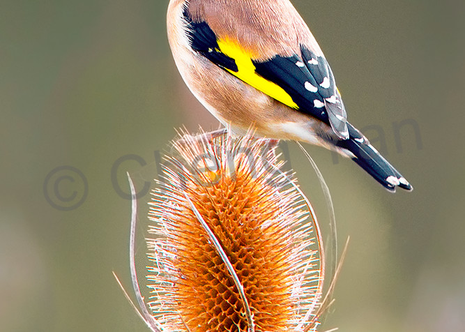 Garden Birds 16 Photography Art | Cheng Yan Studio
