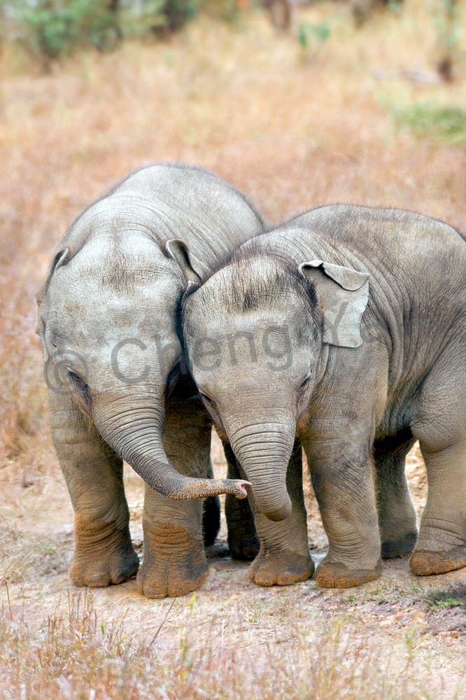Elephants 002 Photography Art | Cheng Yan Studio