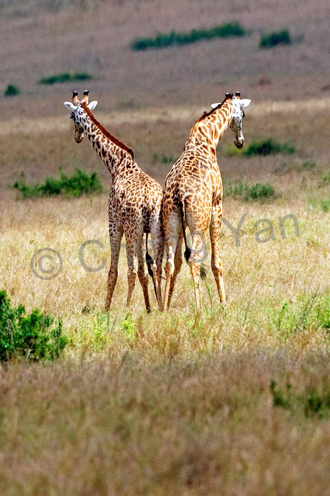 Giraffes 009 Photography Art | Cheng Yan Studio