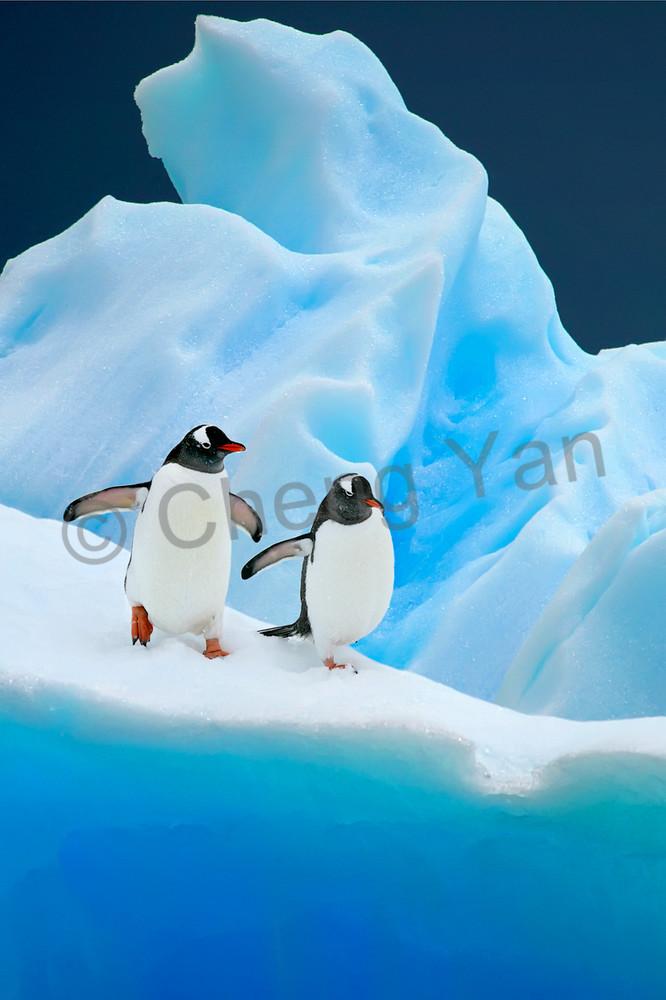 penguins-007