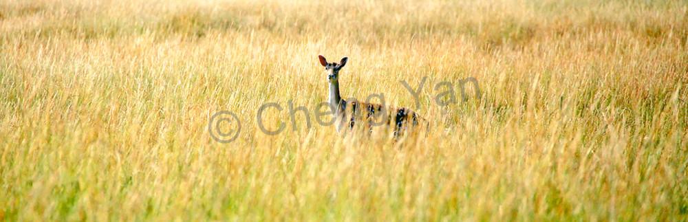 Other European Animals 002 Photography Art   Cheng Yan Studio