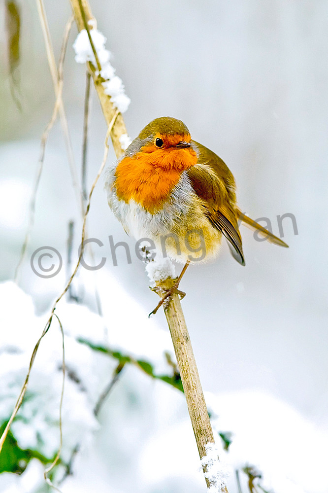 Robins 007 Photography Art | Cheng Yan Studio